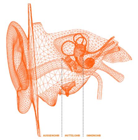 Anatomie des Ohres